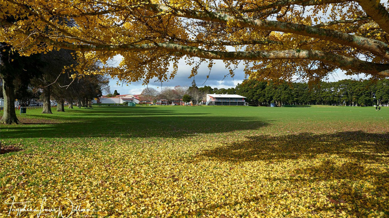 Bledisloe Park (Photo by Tryphena Louise Williams)